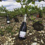 Ca pousse dans les vignes - Champagne Millésimé Louise Brison