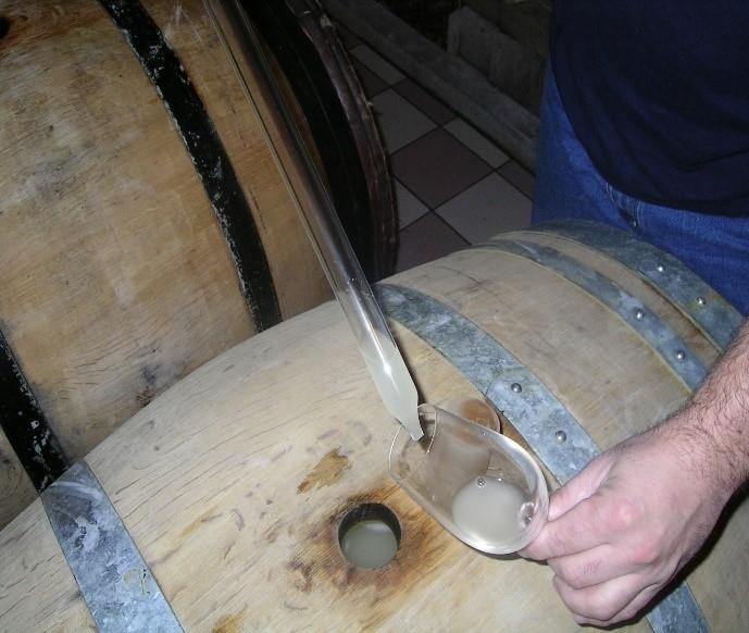dégustation des vins de base 2019 vinifiés en fûts de chêne