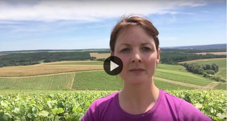 Point sur les vignes 1 semaine apres la floraison - Champagne Millésimé Louise Brison